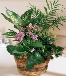 French Garden Sympathy Basket