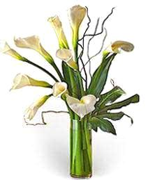 White Callas -- Birthday