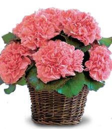 Tufted Carnation Basket