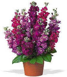 Garden Flora Pot