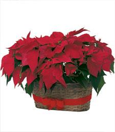 Poinsettia Christmas Basket