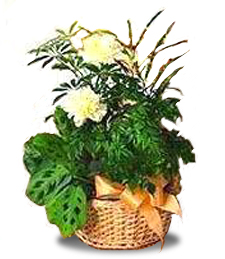 Garden Basket with Yellow Carnations