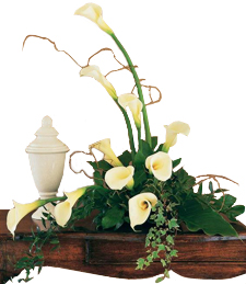 Soft White Callas