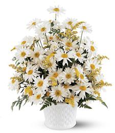 Sunny Daisy Bouquet