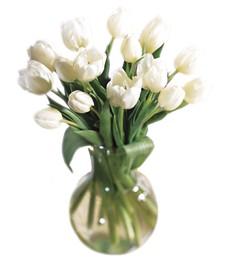 Ivory Tulips Sympathy Bouquet