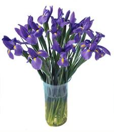 Blooming Iris Bouquet