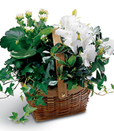 White Assortment Funeral Basket