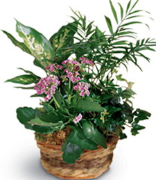 French Garden Funeral Basket