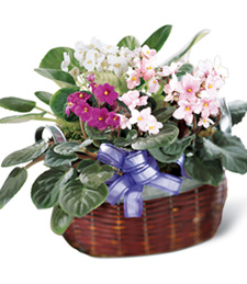 African Violets Birthday Basket