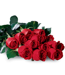 One Dozen Boxed Love Roses