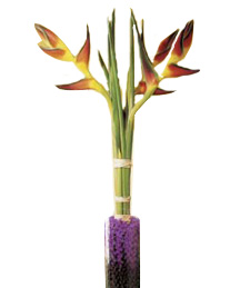 Exotic Heliconia Delight