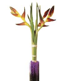 Exotic Heliconia Delight