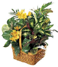 Yellow Blooms Basket