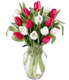 Red and White Birthday Tulips