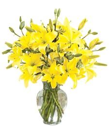 Sunnyside Lily