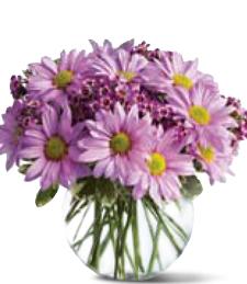 Lavender Daisy Dreams
