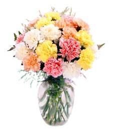 Vivid Carnation