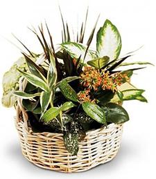 Summer Planter