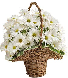 Basket of Daisies