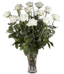 Regal & Pure Roses