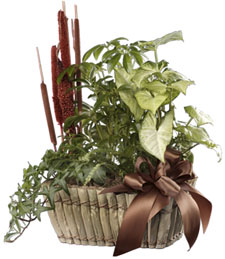 Green Forest Basket