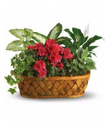 Plants of Abundance