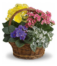 Spring in Bloom Basket