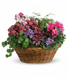 Trendy Chic Plant Basket