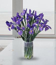 Regal Iris