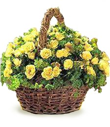 Daydream 'Just Because' Basket