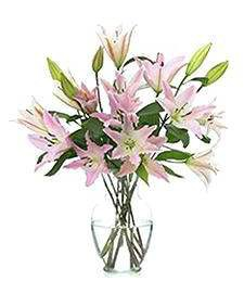 Pink Lilies for Happy Birthday
