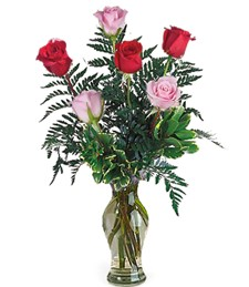 Half-Dozen Red & Pink Get Well Roses