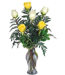 6 White & Yellow Birthday Roses