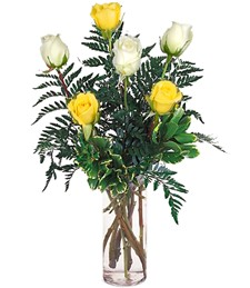 Half-Dozen White & Yellow Roses