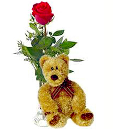 Single Red Birthday Rose & Bear