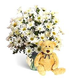 White Daisies and Happy Birthday Bear