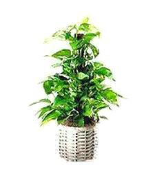 Green Thinking of You Plant