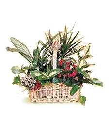 Assorted Plants Funeral Basket