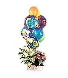 Get Well Plant Basket with Balloons