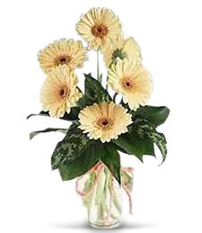 A Splash of Sunshine Flowers