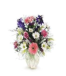 Daisy Craze Get Well Bouquet