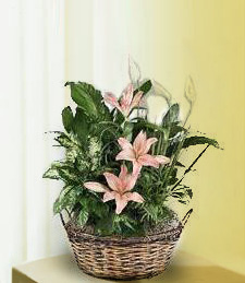 Pink Panther Flower Basket