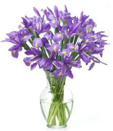 Majestic Irises