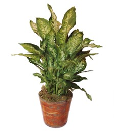 Standing Potted Plant
