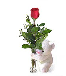 One Perfect Rose and Bear