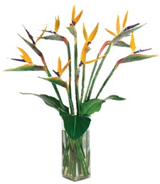 Exquisite Exotics Mother's Day Bouquet