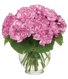 Dainty Pink Carnations