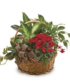 Captivating Plants