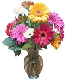 A Rainbow of Gerbera