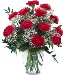 Red Carnation Delight
